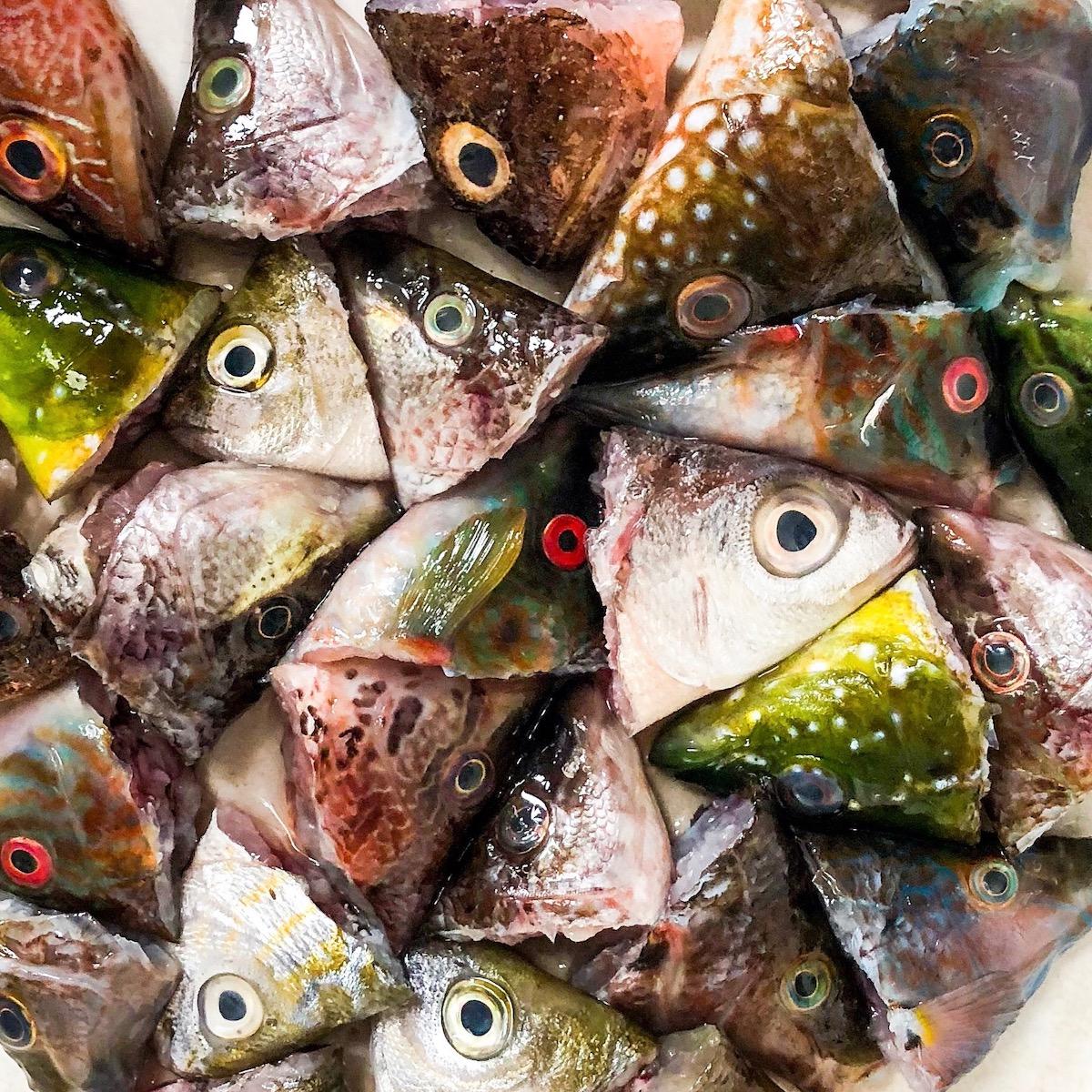 Photo Benoit Rousseau - Têtes de poisson